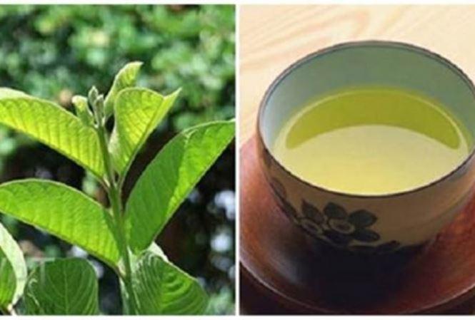 lá trà xanh lấy nước uống trong ngày sẽ tốt cho sức khỏe